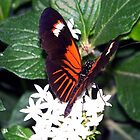 A Butterfly Resting by mark4321
