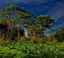 Dwarf Trees ----- Mizieb Malta by Edwin  Catania