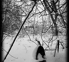 Snowy Wheelbarrow by Luke Stevens