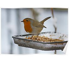 He has had his Fill of Mealworms !!! Poster