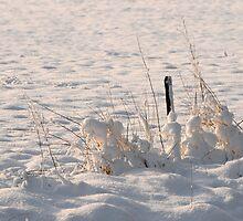 Sea of Snow by cherryannette