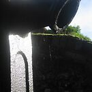Spiderweb Spicket  by Rose9