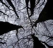 Reach for the Sky by Carol Dawes