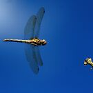 Dragonfly Inflight by FraserJ
