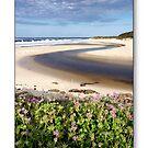Margaret River, Western Australia by thorpey