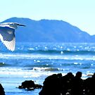 White Ibis over Mazatlan by CheyAnne Sexton