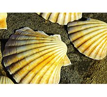She sells sea shells.... Photographic Print