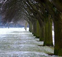 Winter scene in Eaton Park Norwich 2010. by stephen denton