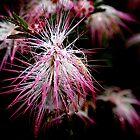 Soggy Fireworks by Bob Wall