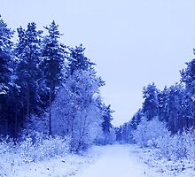Winter Wonderland Walk - No. 4 by charlylou