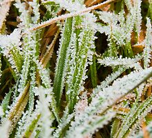 Tiny Ice Crystals on Leaves of Grass by Götz Christof Glaser