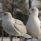two doves or seagulls by ANNABEL   S. ALENTON