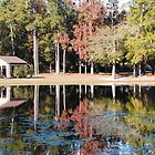 Lake at Poinsett State Park, South Carolina by Joseph Valcourt/Modernus Art Studio