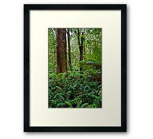 Gum & Ferns Framed Print