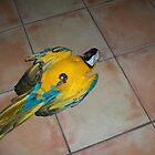 DEAD BIRD by nancy dixon