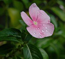 Pink Lady by Ainsley Kellar Creations
