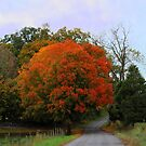 Autumn in Washington County Virginia by Linda Costello Hinchey