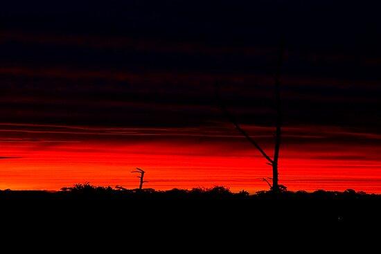 summer sunset by Rosina  Lamberti
