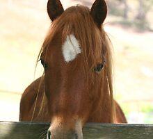 Welsh Mountain Pony by Mereki