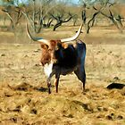 Longhorn in field by jabrwill