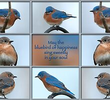 Bluebirds of Happiness by Bonnie T.  Barry