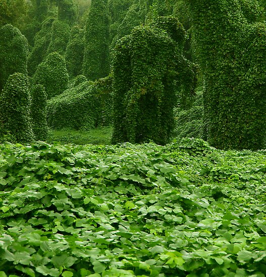 kudzu by J.K. York