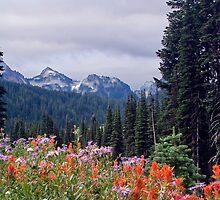 Mt Rainier Valley of Wildflowers by masterofmadness
