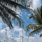 Sail Boat Mast Through the Palms by robert cabrera