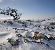 Malham Moor by SteveMG