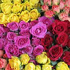 Roses, roses, roses... by Hans Bax