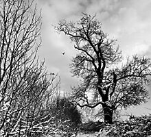 Winter Tree by Lindamell