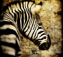 Zebra Texture on Texture by Manfred Belau