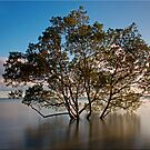 The Mangrove Tree by Kym Howard
