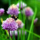 Bumblebee on Purple Flower by Jade Thorby