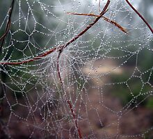 A Tangled Web by Cheryl Parkes