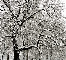 Fabulous snow laden tree in Christchurch Meadows, Oxford by Zoë Power