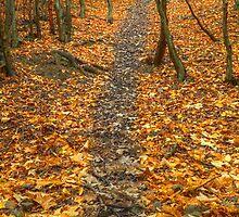Kingdom of dead leaves by Aripaneagra
