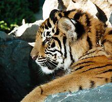 Tiger Cub by Cheryl Parkes