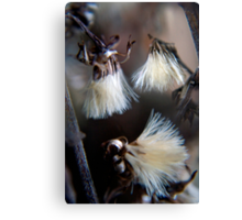 Wild flower in winter 2 Canvas Print