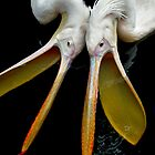 Pelicans by jimmy hoffman
