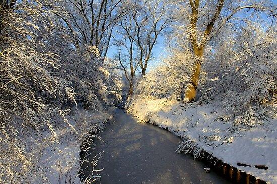 Winter Shine by Jo Nijenhuis