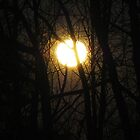 Moon Through the Trees by CG1977