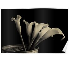 Canned Callas Poster