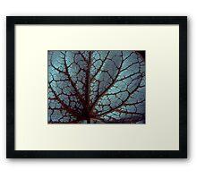 Blue Jack Frost Framed Print
