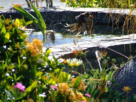 Bathing Birdie  by PhoenixArt