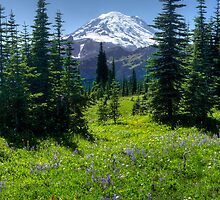 Trail to Dewey Lake - Mt. Rainier Natl. Park by Mark Heller