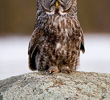 Great Gray Owls of Canada by Michael Cummings