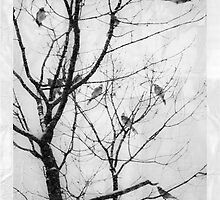BIrds in Winter Storm by Mary Ann Reilly