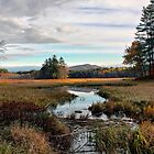 Brownfield Bog - Autumn 2009 by T.J. Martin