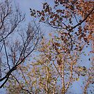 Tree-o by Tama Blough